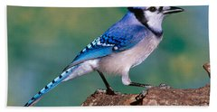 Blue Jay Beach Sheet by Millard H. Sharp