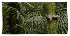 Boa Constrictor In The Rainforest Beach Sheet by Pete Oxford