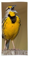Calling Eastern Meadowlark Beach Towel by Jerry Fornarotto