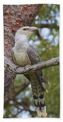 Channel-billed Cuckoo Fledgling Beach Towel by Martin Willis
