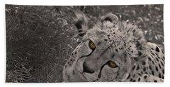 Cheetah Eyes Beach Sheet by Martin Newman