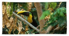 Chestnut-mandibled Toucan Beach Towel by Art Wolfe