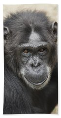 Chimpanzee Portrait Ol Pejeta Beach Sheet by Hiroya Minakuchi
