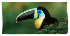 Citron-throated Toucan Beach Towel by Art Wolfe