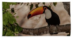 Close-up Of Tocu Toucan Ramphastos Toco Beach Towel by Panoramic Images