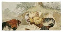 Cocks Fighting Beach Sheet by Melchior de Hondecoeter