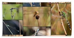 Collage Marsh Life Beach Sheet by Carol Groenen
