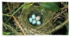 Common Cuckoo Cuculus Canorus Egg Laid Beach Towel by Jean Hall