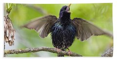 Common Starling Singing Bavaria Beach Sheet by Konrad Wothe