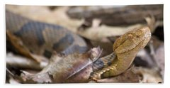 Copperhead In The Wild Beach Sheet by Betsy Knapp