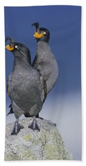 Crested Auklet Pair Beach Towel by Toshiji Fukuda