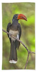 Crowned Hornbill Perching On A Branch Beach Towel by Panoramic Images
