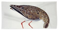 Curlew Sandpiper Beach Towel by Charles Collins