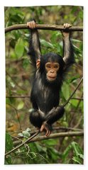 Eastern Chimpanzee Baby Hanging Beach Sheet by Thomas Marent