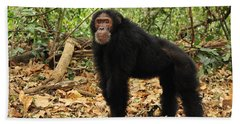 Eastern Chimpanzee Gombe Stream Np Beach Sheet by Thomas Marent