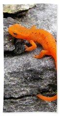 Orange Julius The Eastern Newt Beach Towel by Lori Pessin Lafargue