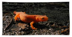Eastern Newt Red Eft Beach Sheet by Christina Rollo