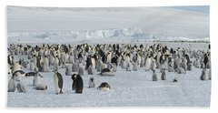 Emperor Penguins Aptenodytes Forsteri Beach Towel by Panoramic Images