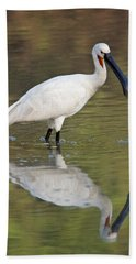 Eurasian Spoonbill Platalea Leucorodia Beach Towel by Panoramic Images