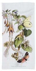 Feasting And Fun Among The Fuschias Beach Towel by Richard Doyle