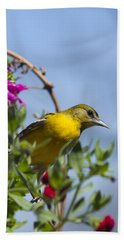 Female Baltimore Oriole In A Flower Basket Beach Towel by Christina Rollo
