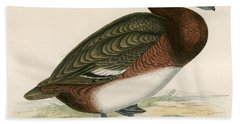 Ferruginous Duck Beach Towel by Beverley R Morris