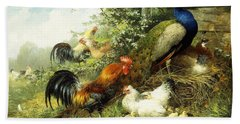 Fowl And Peacocks Beach Towel by Arthur Fitzwilliam Tait