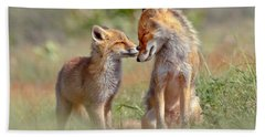 Fox Felicity - Mother And Fox Kit Showing Love And Affection Beach Sheet by Roeselien Raimond