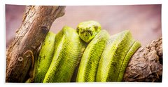 Green Tree Python Beach Towel by Pati Photography