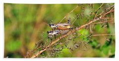 Gregarious Grasshoppers Beach Sheet by Al Powell Photography USA