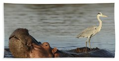 Grey Heron On Hippopotamus Kruger Np Beach Towel by Perry de Graaf
