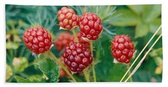Highbush Blackberry Rubus Allegheniensis Grows Wild In Old Fields And At Roadsides Beach Sheet by Anonymous