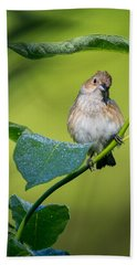 Indigo Bunting Female Beach Sheet by Bill Wakeley