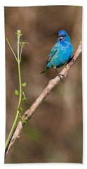 Indigo Bunting Portrait Beach Sheet by Bill Wakeley
