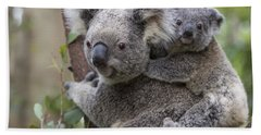 Koala Joey On Mothers Back Australia Beach Sheet by Suzi Eszterhas