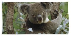 Koala Male In Eucalyptus Australia Beach Sheet by Gerry Ellis