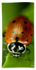 Ladybug On Green Beach Towel by Iris Richardson