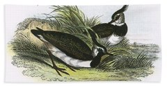 Lapwing Beach Towel by English School
