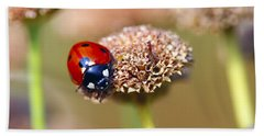 Lil Ladybug 2 Beach Towel by Sharon Talson