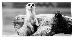 Little Meerkat Beach Towel by Pati Photography