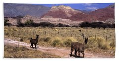 Llamas And Cerro Yacoraite Argentina Beach Towel by James Brunker