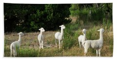 Llamas Standing In A Forest Beach Sheet by Panoramic Images