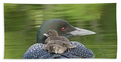 Loon Chicks -  Nap Time Beach Towel by John Vose