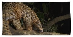 Malayan Pangolin Eating Ants Vietnam Beach Towel by Suzi Eszterhas