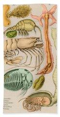 Marine Fauna Beach Sheet by Science Source