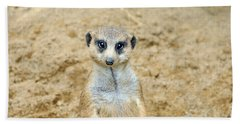Meerkat Beach Towel by Aimee L Maher Photography and Art Visit ALMGallerydotcom