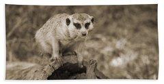 Meerkat On A Log Beach Sheet by Douglas Barnard