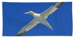 Northern Gannet Beach Towel by Tony Beck