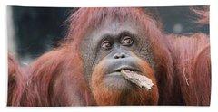Orangutan Portrait Beach Towel by Dan Sproul