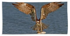 Osprey Morning Catch Beach Sheet by Susan Candelario